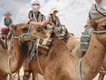Chameau désert du Tunisie